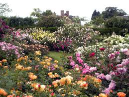 Small Picture Stunning Rose Garden Design Ideas Wearefound Home Design