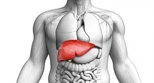 صحة الكبد