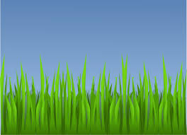 green grass field animated. Download This Image As: Green Grass Field Animated L