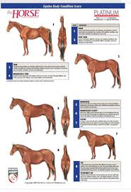 Miniature Horse Weight Chart Equine Score By Equineacademics Com Horse Care Horses