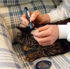 Diabetic Cat Food Chart Feline Diabetes Treatment And Prevention In Cats