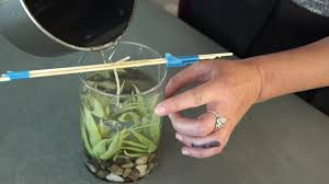 it s important to arrange the wick so that it sits above the objects in the jar once placed hold wick in place with chopsticks pour gel carefully