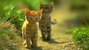 two cat wallpaper cute