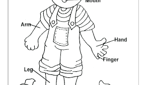 Human Body Coloring Page Lovely K1083 My Pages Astonishing Along