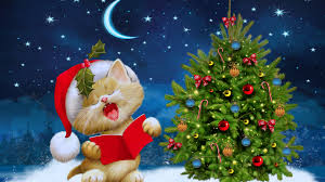 Merry Christmas kitten Ultra HD wallpaper | UHD-Wallpapers.Net