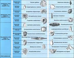 the process of relative dating fossils uses which measure
