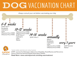 Pug Dog Vaccination Chart Which Dog Vaccinations Are Necessary Caninejournal Com