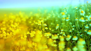 nature backgrounds hd. Plain Nature Stock Video Of Herbs And Chamomile Waved By Ocean  3912077 Shutterstock In Nature Backgrounds Hd