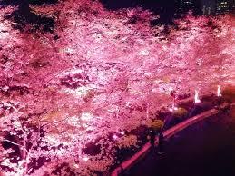 「旭山夜桜フリー画像」の画像検索結果