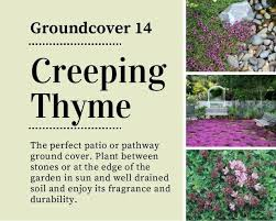 garden ground covering ideas creeping thyme gardens mall food garden ground covering ideas