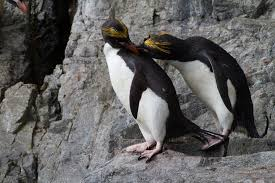 essay on penguins third grade love penguins sneaux days the new york times penguin facts and information emperor penguin