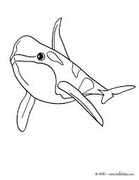 Small Picture Bottlenose dolphin coloring pages Hellokidscom