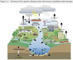 water pollution facts and causes of it environmental data management water pollution facts