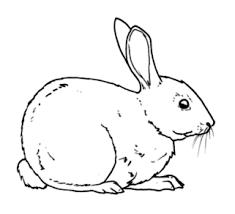 Piccolo Coniglio Da Stampare E Da Colorare Animali Disegni Da
