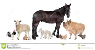 farm animals together. Simple Animals Group Of Farm Animals For Farm Animals Together A
