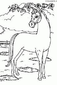 Paarden Kleurplaat Kleurplaten 3536 Kleurplaat Kleurennet