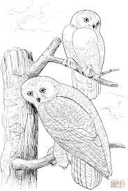 Small Picture Two Snowy Owls coloring page Free Printable Coloring Pages