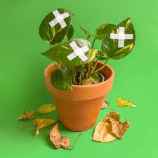 Plant-Aid with Planto Momma