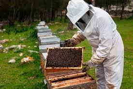 Αποτέλεσμα εικόνας για ESPAÑA miel