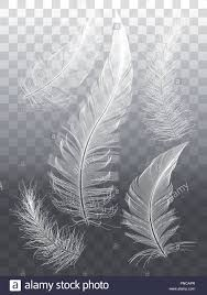 Feather Graphic Design Detailed White Feathers Set Of Vector Graphic Design