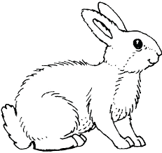 realistic rabbit coloring pages. Unique Realistic Coloring Pages Of Rabbits Realistic Bunny Rabbit Printable  Enjoy Animals A Great And Funny Throughout Realistic Rabbit Coloring Pages C