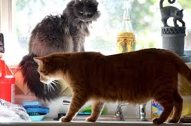 can you keep these two cats off the kitchen counter