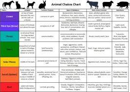 Animal Chakra Chart Animal Reiki Chakra Chart Reiki
