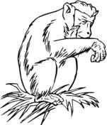 Small Picture Common Chimpanzee coloring page Free Printable Coloring Pages