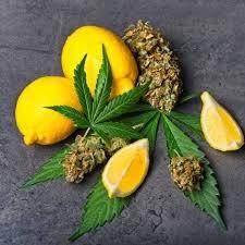 limonene effects