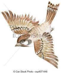 flying sparrow clipart. Perfect Flying Sparrow  Csp4071446 In Flying Clipart