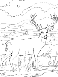 Deer Coloring Page for Kids one page project template,page free download card designs on project progress update template