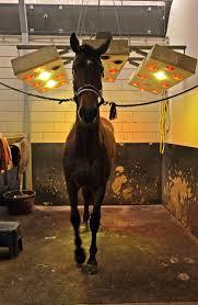 Paarden Vervelen Zich Vaak Stierlijk Nrc