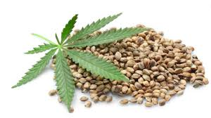 Image result for The Secret Health Benefits of Hemp Protein