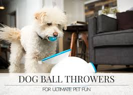 top automatic dog ball throwers reviewed