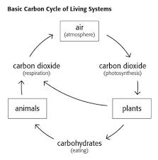 Carbon Cycle Flow Chart Flowchart Diagram For Oxygen Cycle Carbon Cycle And