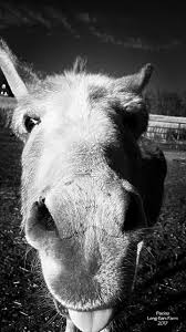The 329 best images about for Lili xxx on Pinterest Donkeys.