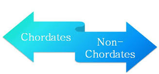 Difference Between Chordates And Non Chordates With