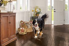 pet friendly hardwood in the foyer