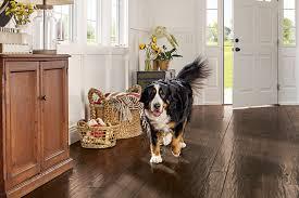 pet friendly hardwood in the foyer