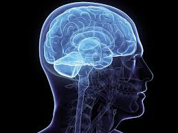 healthy mind in healthy body lifelong exercise keeps the brain healthy mind in healthy body lifelong exercise keeps the brain working better the independent