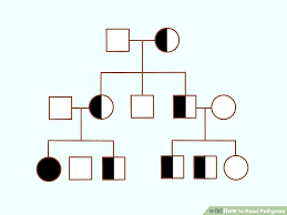 3 Ways To Read Pedigrees Wikihow