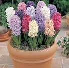 Цветущие комнатные растения домашних условиях