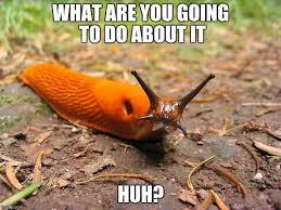 Image result for pesticide meme