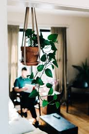 indoor apartment gardening. Delighful Apartment Indoor Gardening In A Tiny Apartment  Plants Are Amazingly Resilient  Persist Learn And Apartment Gardening