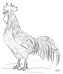 Small Picture Brown Leghorn rooster coloring page Free Printable Coloring Pages