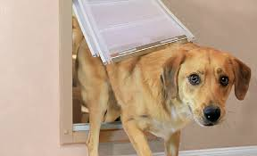 how to choose a dog door the home depot