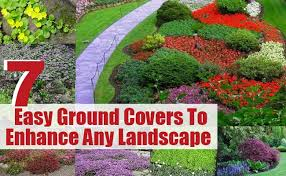 garden ground cover. \u0027Ground Covers\u0027 Are The Best Solution For Those Patchy Areas Of Your Yard. These Perennials, Which Have Ability To Spread Over An Area. Garden Ground Cover H