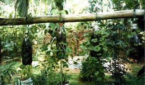 Small Picture Gardening Ideas Sri Lanka Home garden in matugama sri lanka ideas