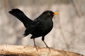 Bildresultat för gratis bilder fåglar