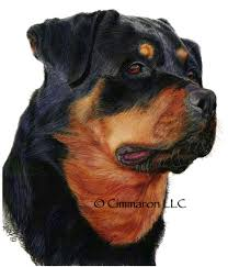 Small Picture Rottweiler Coloring Pages Coloring Coloring Pages